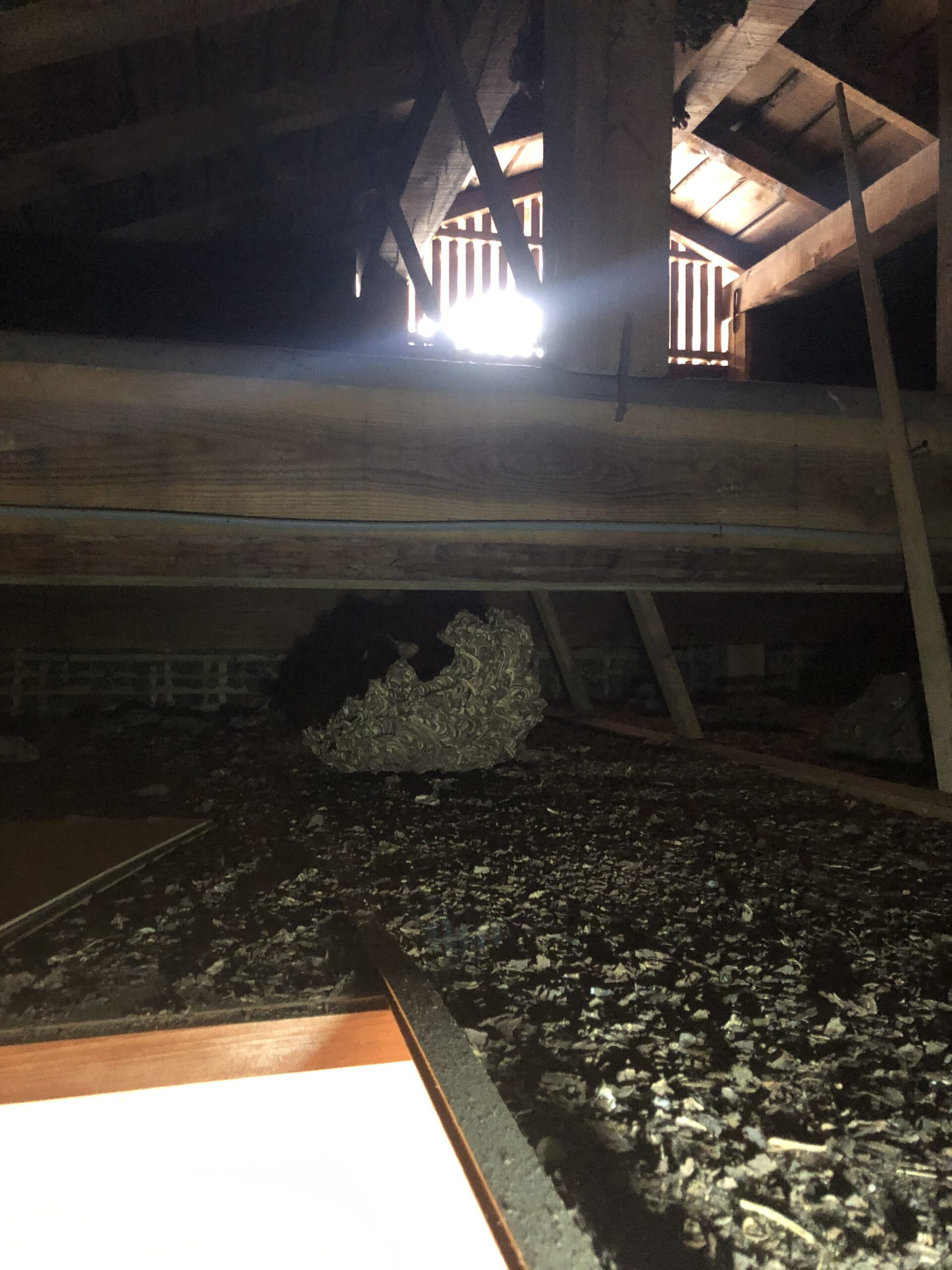 害獣駆除 屋根裏 画像 調査